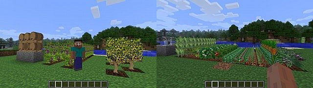 3cd12  Plants and Food Mod 1 Plants and Food Imagenes