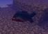 [1.8] Shipwrecks Mod Download